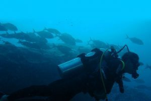 Plongeur Carangues à Madagascar